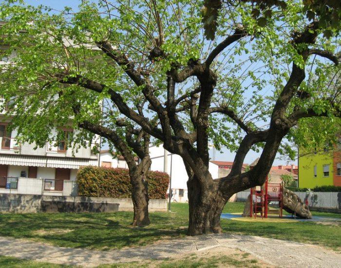 Lugagnano-Parco-Don-Gnocchi-6