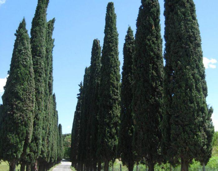 San-Giorgio-in-Salici-Cimitero